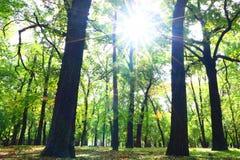 Bosque da floresta Fotos de Stock Royalty Free