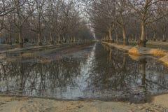 Bosque da noz Imagens de Stock Royalty Free