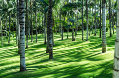 Bosque da palma Foto de Stock
