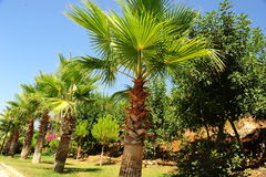 Bosque da palma fotografia de stock royalty free