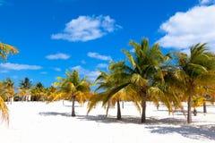 Bosque da palma com a areia branca em Cayo Largo Island caribbean cuba imagem de stock royalty free