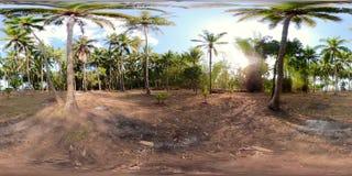 Bosque da palma em Ásia vr360 video estoque