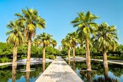 Bosque da palma em Al Shaheed Park, a Cidade do Kuwait imagens de stock