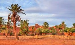 Bosque da palma em Ouarzazate, Marrocos imagem de stock royalty free