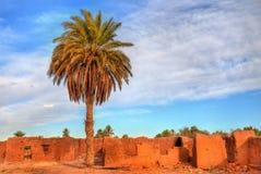Bosque da palma em Ouarzazate, Marrocos imagens de stock