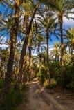 Bosque da palma em Tunísia imagem de stock
