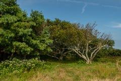 Bosque das árvores em Gregory Bald imagens de stock royalty free
