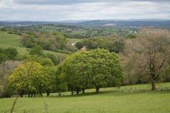 Bosque das árvores nos montes de Galês imagens de stock