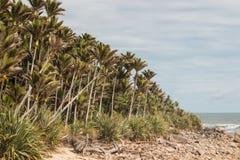 Bosque das palmas de Nikau imagens de stock royalty free
