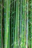 Bosque de árvores de bambu verdes fotos de stock