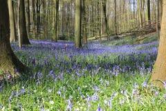 Bosque de abril Fotografía de archivo libre de regalías