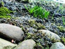 Bosque de abril de la marcha de la hierba y de la naturaleza de la piedra foto de archivo