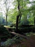 Bosque de Almindingen en la isla hermosa de Bornholm, Dinamarca en primavera Imagen de archivo libre de regalías