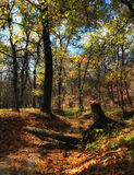 Bosque de Autmn Imagen de archivo libre de regalías