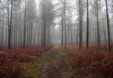 Bosque de Automn Imágenes de archivo libres de regalías