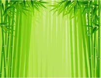 Bosque de bambú Fotos de archivo libres de regalías