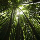 Bosque de bambú. Fotos de archivo libres de regalías