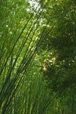 Bosque de bambú Foto de archivo libre de regalías