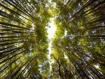 Bosque de bambú, Arashiyama, Japón Fotos de archivo libres de regalías