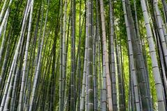 Bosque de bambú, Arashiyama, Japón Foto de archivo