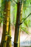 Bosque de bambú asiático con luz del sol foto de archivo libre de regalías