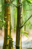 Bosque de bambú asiático con luz del sol imagenes de archivo