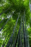 Bosque de bambú brillante hermoso con los troncos altos imagenes de archivo