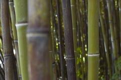 Bosque de bambú del zen Foto de archivo libre de regalías
