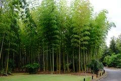 Bosque de bambú dentro del jardín japonés del parque de la conmemoración de la expo foto de archivo libre de regalías
