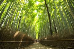 Bosque de bambú en Arashiyama, Kyoto, Japón foto de archivo libre de regalías