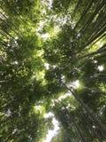 Bosque de bambú en Arashiyama Kyoto, Japón Imágenes de archivo libres de regalías
