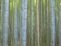 Bosque de bambú en el área de Kyoto Arashiyama fotos de archivo