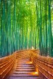 Bosque de bambú en Kyoto, Japón Foto de archivo libre de regalías