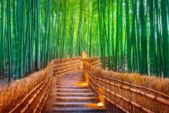Bosque de bambú en Kyoto, Japón imágenes de archivo libres de regalías