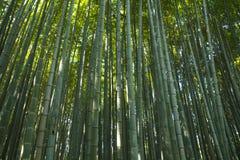 Bosque de bambú en Kyoto, Japón Imagen de archivo