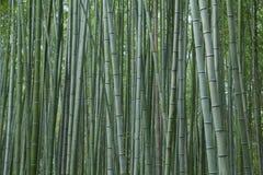 Bosque de bambú en Kyoto, Japón Foto de archivo
