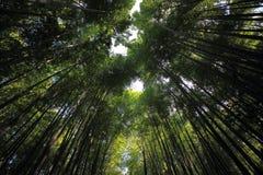 Bosque de bambú en Kyoto Japón Fotos de archivo libres de regalías