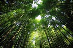 Bosque de bambú en Kyoto Japón Imágenes de archivo libres de regalías