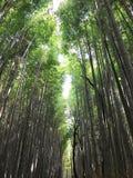 Bosque de bambú en Kyoto Japón Imagen de archivo libre de regalías