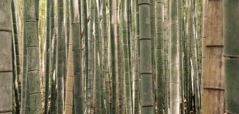 Bosque de bambú en Kyoto Japón foto de archivo