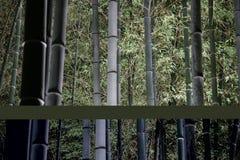 Bosque de bambú en la noche fotos de archivo