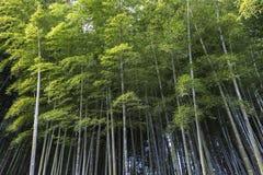 Bosque de bambú en templo del nenbutsuji de Adashino Imagenes de archivo
