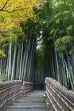 Bosque de bambú en templo del nenbutsuji de Adashino Fotos de archivo libres de regalías