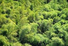 Bosque de bambú enorme Fotos de archivo