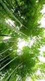 Bosque de bambú hermoso en Arashiyama, Kyoto Foto de archivo libre de regalías
