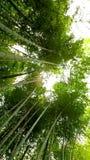 Bosque de bambú hermoso en Arashiyama, Kyoto Fotos de archivo libres de regalías