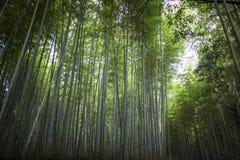 Bosque de bambú japonés Imagen de archivo libre de regalías