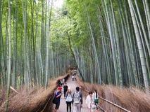 Bosque de bambú japonés foto de archivo libre de regalías
