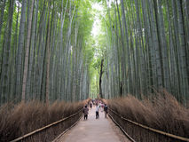 Bosque de bambú japonés imagenes de archivo