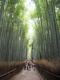 Bosque de bambú japonés Foto de archivo